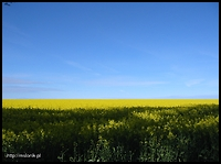 images/stories/20091227_Kalendarz2009/640_napis_05_maj_W_100-0070_IMG_rzepak.jpg