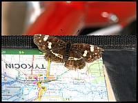 images/stories/20120714_Biebrza/640_IMG_7249_Motylek_v1.JPG