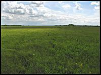 images/stories/20120715_Biebrza/640_IMG_7422_Lawki_v1.JPG
