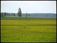 images/stories/20120715_Biebrza/640_IMG_7438_Lawki_v1.JPG