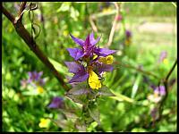 images/stories/20120715_Biebrza/640_IMG_7454_Kwiatek_v1.JPG