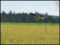 images/stories/20120715_Biebrza/640_IMG_7482_Blotniak_v1.JPG