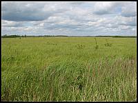images/stories/20120715_Biebrza/640_IMG_7515_Lawki_v1.JPG