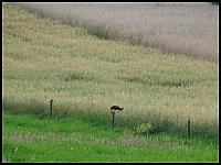 images/stories/20120715_Biebrza/640_IMG_7622_Drapol_v1.JPG