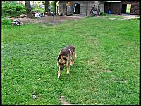 images/stories/20120716_Biebrza/640_IMG_7643_Piechu_v1.JPG